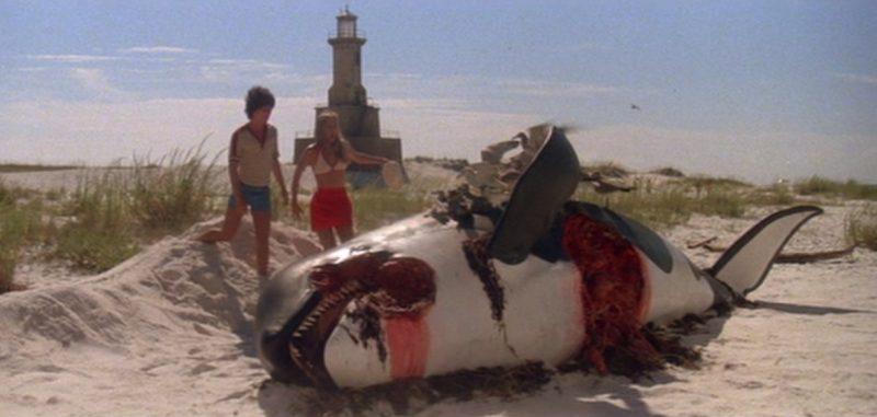 La orca muerta avisa del peligro