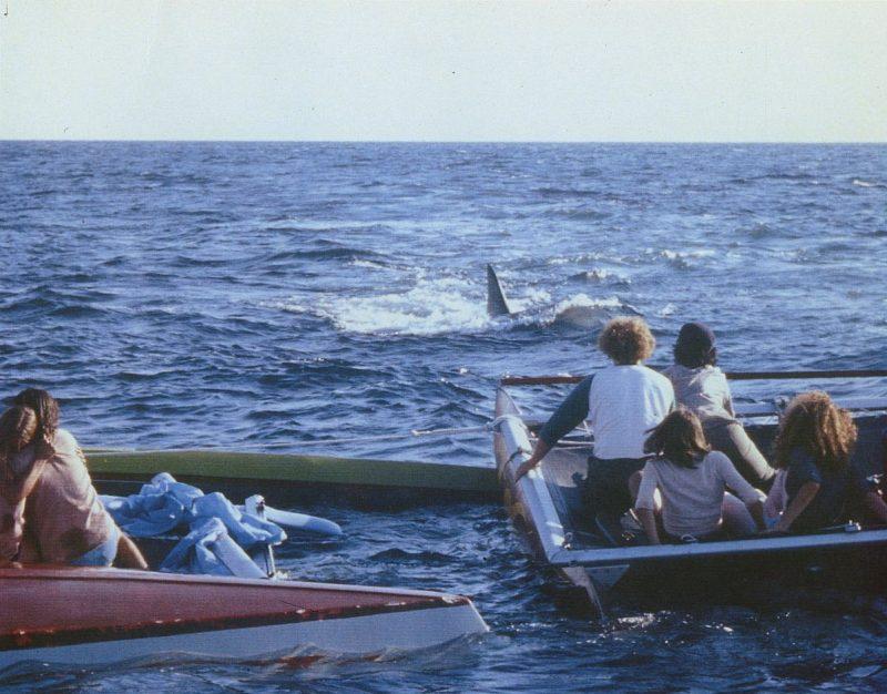 El tiburón acechará sin descanso a los adolescentes