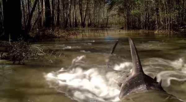 En la mayoría de escenas, los tiburones se verán nadando o saltando, nada más